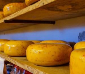 Käse aus tierischer Produktion